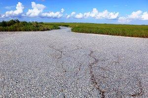 Keine Schotterpiste mit kleinen Steinchen, sondern unzählige tote Fische: Dieses erschreckende Bild bietet sich in der Region um den Flussarm Bayou Chaland im Landkreis Plaquemines Parish in Louisiana. Ob das Fischesterben nahe des Mississippi-Deltas mit der Ölpest zusammenhängt, ist noch unklar. Allerdings war die Region mit am schlimmsten betroffen